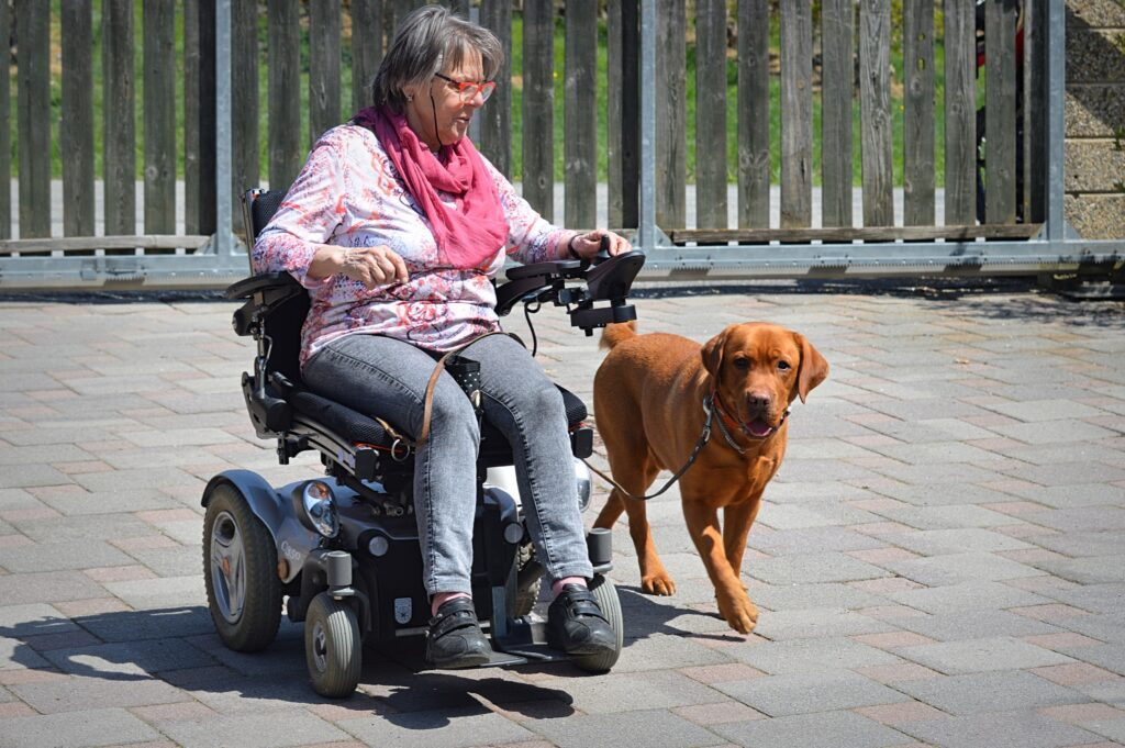 Dog walking next to person in a power wheelchair